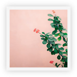 Green on Pink II - Square