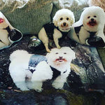 Custom Dog Photo Shaped Pillow