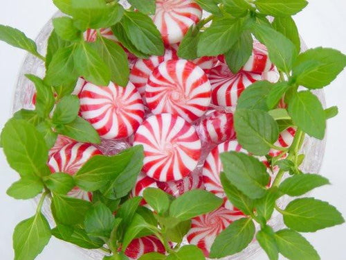 Peppermint - Quality Scents highly scented wax melts