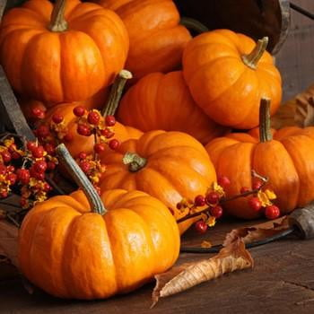 Pumpkin Harvest - Quality Scents highly scented wax melts