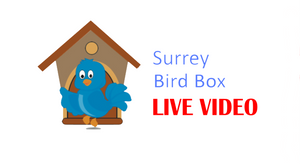 The Birdy and Blue live bird box camera