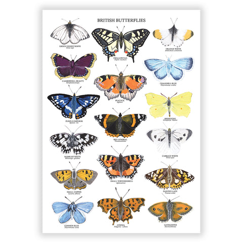 British Butterflies Art Print