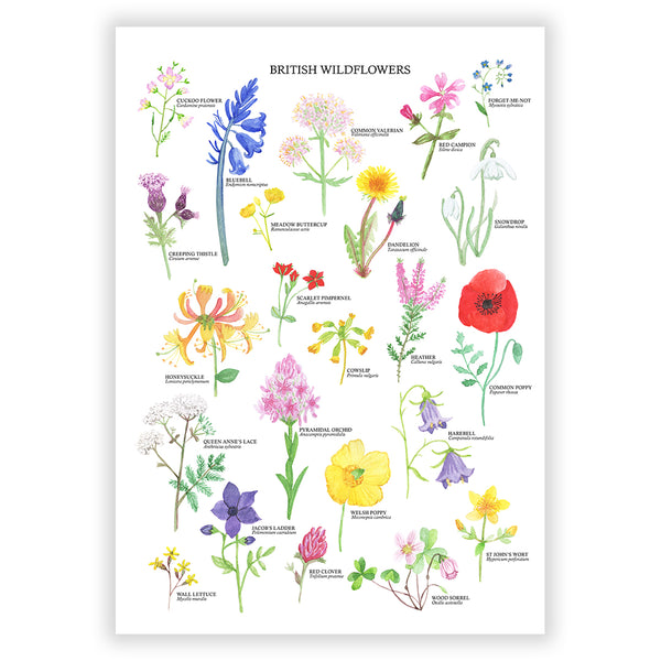 British Wildflowers Art Print