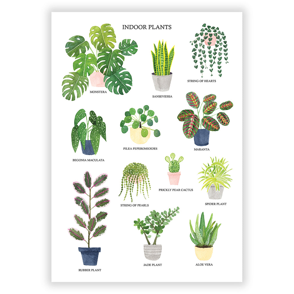 Indoor Plants Art Print - Sarah Frances