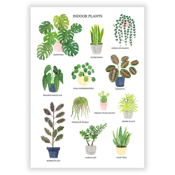 Indoor Plants Art Print