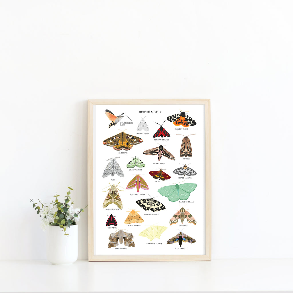 British Moths Art Print - Sarah Frances
