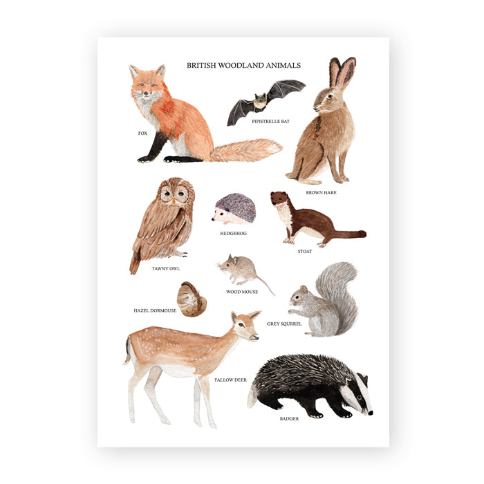 British Woodland Animals Art Print - Sarah Frances