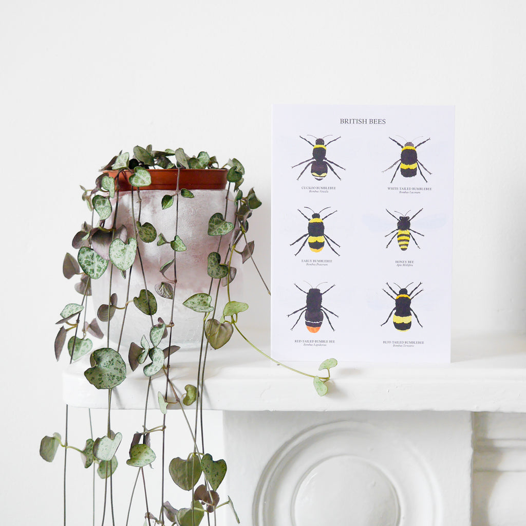 British Bees Greetings Card - Sarah Frances
