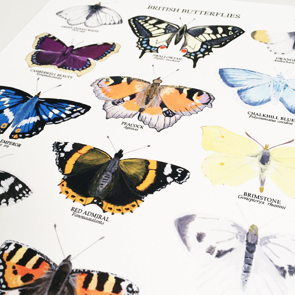 British Butterflies Art Print - Sarah Frances