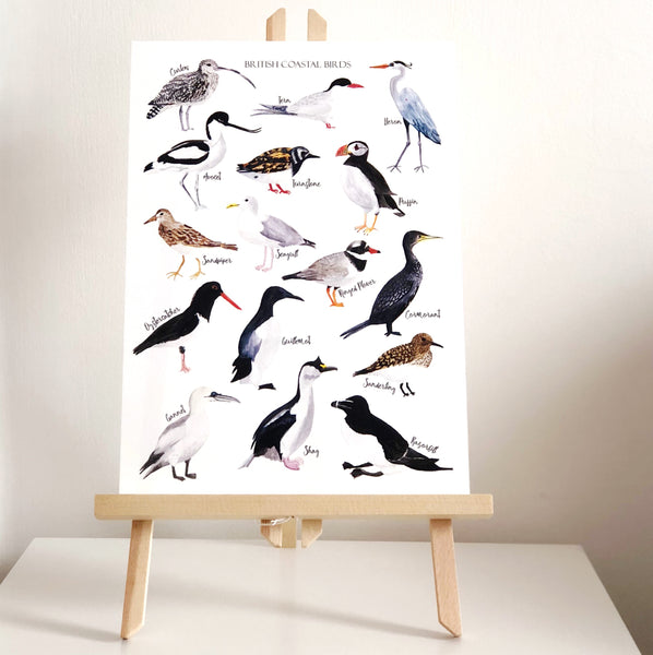 British Coastal Birds Art Print