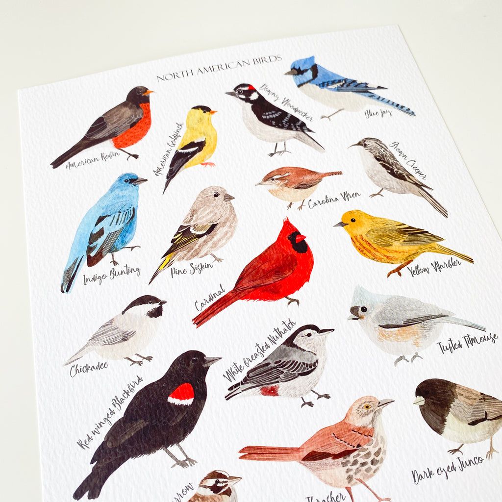 North American Birds Art Print - Sarah Frances