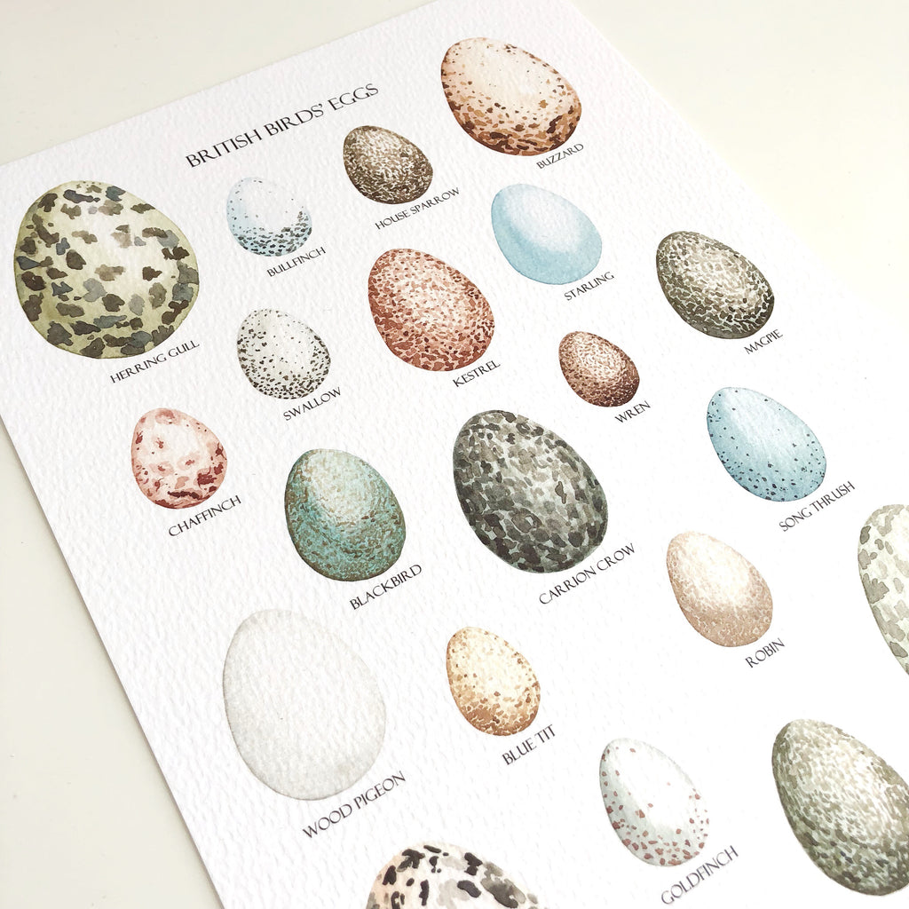 British Birds' Eggs Art Print - Sarah Frances