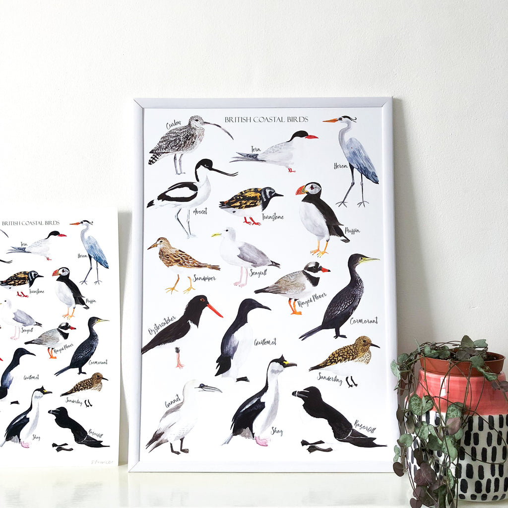 British Coastal Birds Art Print - Sarah Frances