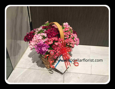 Sweet William in a Basket - ZZR4147