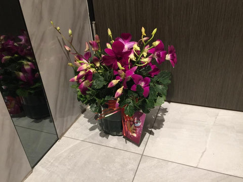 Orchid in a vase - ZZR1418