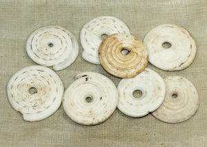 Set of Eight Kualia Small-hole Shells from Papau New Guinea