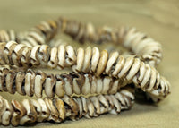 Antique Mini Cowrey Shell Necklace from Papau New Guinea