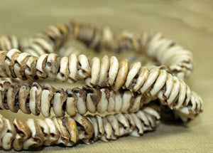 Antique Cowry Shell Necklace from Papau New Guinea