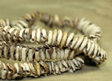 Antique Cowrey Shell Necklace from Papau New Guinea