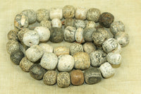 Strand of Cool Fossilized Stegodon Bone Beads