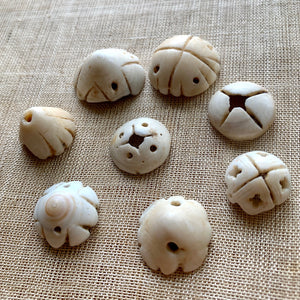 Larger Carved Shells, Mali, Set of 8