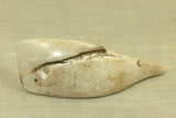 Conch Shell Pendant from Nagaland