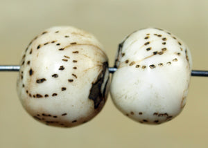 Pair of Traditional Patterned Conch Shell Beads from Nagaland