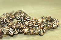 Strand of Moroccan Zebra Shells; Mixed Colors