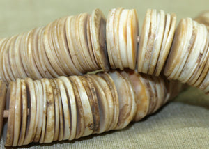 Flat Shell Beads from Togo