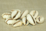 Bag of 10 Small Cowry Shell Beads