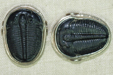 Fossilized Trilobite Sterling Silver Bead, B