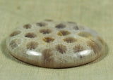 Disc Shaped Indonesian Fossil Cabochon; Lou Zeldis Studio
