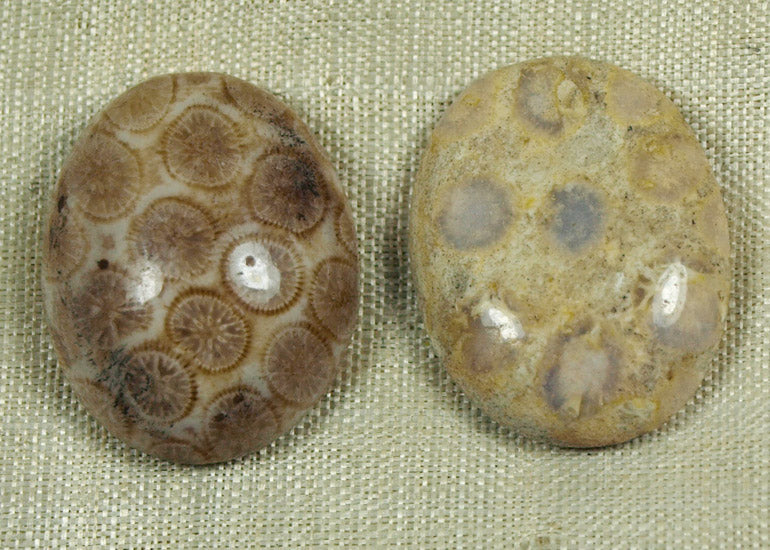 Pair of Indonesian Fossil Coral Cabochons; Lou Zeldis Collection