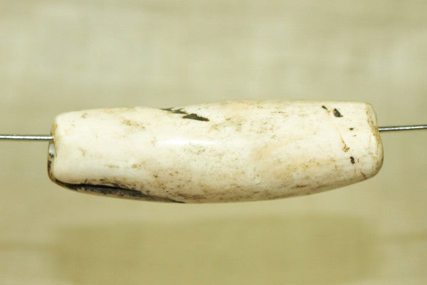 Tribal Conch Shell Bead from Nagaland