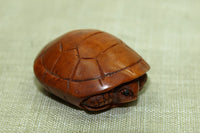 Turtle hiding in its shell