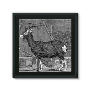 Billy Goat Framed Eco-Canvas