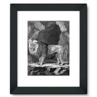 Lion Framed Fine Art Print