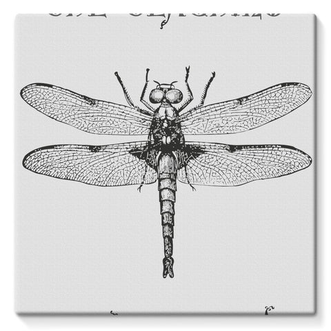 Dragonfly Stretched Canvas