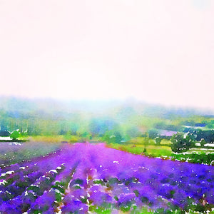 Kentish Lavender Farm