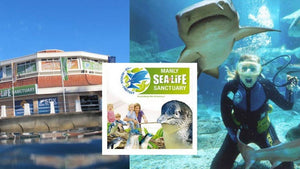 Manly Sea Life Sanctuary悉尼曼利水族館