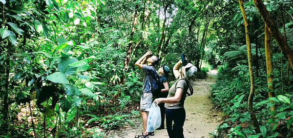 Nature enthusiasts looking for birds at Imbiah Trail