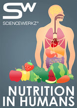 Science Werkz Nutrition in Humans