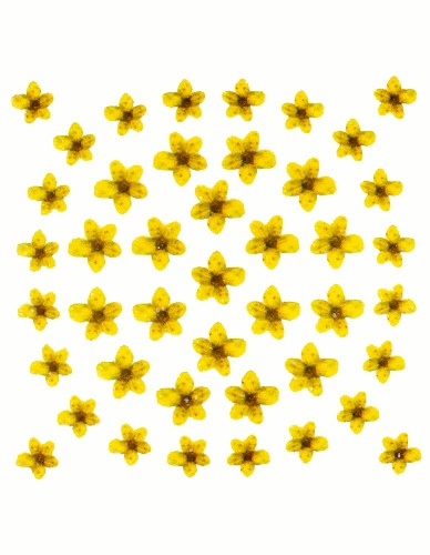 Dry Flower Design - Yellow