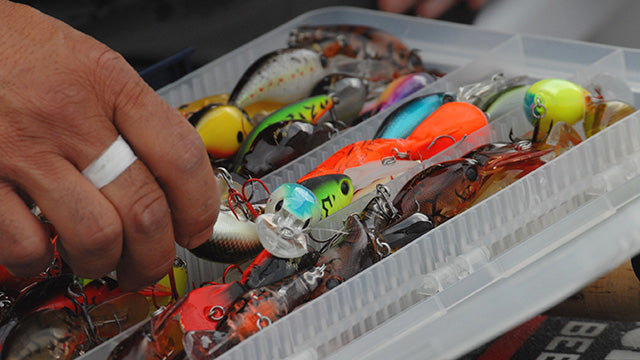 Artificial Lures vs Live Bait