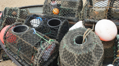 Fish Traps in Detail