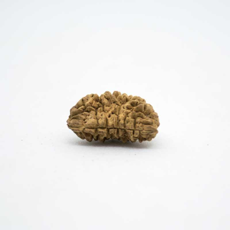 Benefits of Ek Mukhi Rudraksha that You should Garner