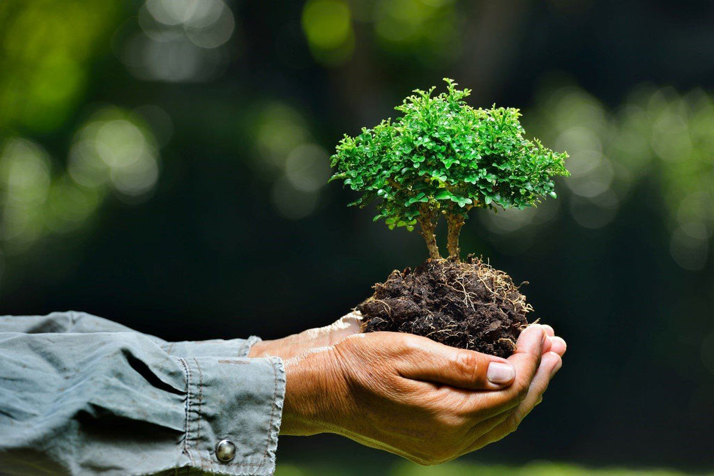 World Environment Day Importance – 5 Effective Ways To Save The Environment