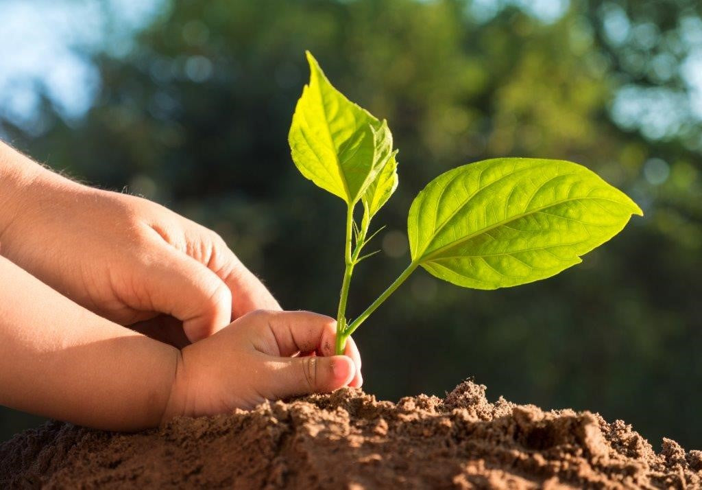 ways to save the environment- plant a tree