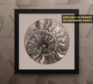 Fossil Ammonite Rock Wall Art for the Living Room image
