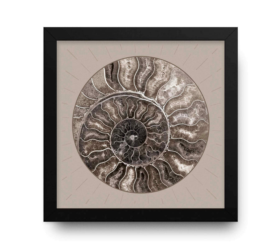 Contemporary Cream Spiral Abstract Shell Circle image
